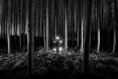 Dark Art (Rob Pitt) Tags: blackwhite lightpainting night wirral trees longexposure