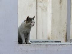 pushkar 2019 (gerben more) Tags: cat pet animal pushkar rajasthan india