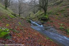 Parque Natural de Gorbeia  2019   #DePaseoConLarri #Flickr-19 (Jose Asensio Larrinaga (Larri) Larri1276) Tags: 2019 orozko bizkaia basquecountry euskalherria parquenaturaldegorbeiagorbea navarra otoño fotografía airelibre saltosdeagua naturaleza