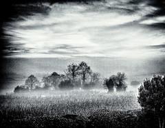 FallMistB&W.jpg (Klaus Ressmann) Tags: klaus ressmann omd em1 fburie fog landscape nature vineyard winter blackandwhite design flcnat grain trees klausressmann omdem1