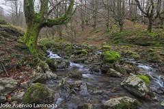 Parque Natural de Gorbeia  2019   #DePaseoConLarri #Flickr-11 (Jose Asensio Larrinaga (Larri) Larri1276) Tags: 2019 orozko bizkaia basquecountry euskalherria parquenaturaldegorbeiagorbea navarra otoño fotografía airelibre saltosdeagua naturaleza