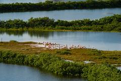 SouthPadreIsland_306 (allen ramlow) Tags: south padre island birding nature center landscape wildlife sony alpha travel day