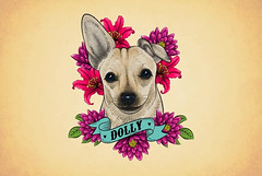 Dolly (simang.studio) Tags: animals nature animal pets cute wildlife love pet cats dogs dog photography cat instagram naturephotography photooftheday dogsofinstagram catsofinstagram birds instagood petstagram animallovers art wildlifephotography puppy petsofinstagram animalphotography animalsofinstagram bhfyp