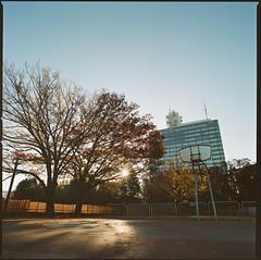 2019/11/29 代々木公園 (Vic Tsai) Tags: hasselblad 503cw zeiss distagon t 40mm f4 cf fle kodak portra 800 film