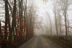 the last autumn (hobb_zhao) Tags: tree autumn color nature natur landscape landschaft farbe nebel fog germany deutschalnd red rot baum licht light