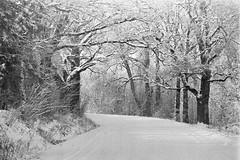 Snowy Road (rATRIJS) Tags: canon135mmf35ltm 135mm ltm canon model7 canonmodel7 ilfordhp5plus ilfordhp5 hp5 hp5plus ilford expiredfilm l39 m39 rangefinder standdevelopment rodinal compardr09 analog 35mm bw blackandwhite winter latvia latvija cold snow
