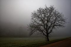 Un arbre dans la brume (Glc PHOTOs) Tags: 20191205145231glc5842nikond85024mmdxo glcphotos nikon d850 fx full frame 45mpixel tamron sp 2470mm f28 di vc usd g2 tamronsp2470mmf28divcusdg2 a032 tree fog arbre brume brouillard