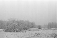 An Area Of Snow (rATRIJS) Tags: canon50mmf18ltm 50mm ltm canon model7 canonmodel7 ilfordhp5plus ilfordhp5 hp5 hp5plus ilford expiredfilm l39 m39 rangefinder standdevelopment rodinal compardr09 analog 35mm bw blackandwhite winter latvia latvija cold snow