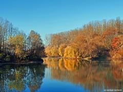comp_PC040169  EM5 Mark IIi_CPPSE2 (Mike Reichardt) Tags: autumn herbs water wasser reflection spiegelung landscape landschaft altrheinarm palatinate germany