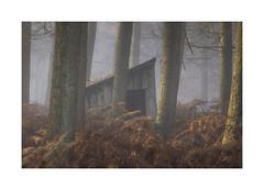 The wood cutters hut (Ade G) Tags: landscape nature seasons weather autumn bracken colour light mist orange plants trees