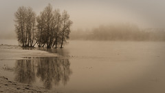 Dans la brume - Loire (GillesAdrien) Tags: photography photo jargeau france loiret loire europe eau french fleuve reflets reflections reflection blackandwhite brouillard fog froid triste trees tree unesco nature