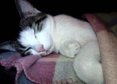 ich verabschiede mich für heute.... (karin_b1966) Tags: katze cat tier animal haustier domesticanimal stubentiger roomtiger kitten 2019 balu