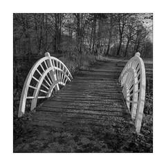 The bridge (K.Pihl) Tags: hasselblad500cm monochrome bridge park distagon50mmf40 hc110b pellicolaanalogica schwarzweiss bw blackwhite analog film