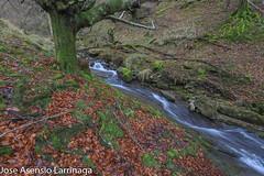 Parque Natural de Gorbeia  2019   #DePaseoConLarri #Flickr-24 (Jose Asensio Larrinaga (Larri) Larri1276) Tags: 2019 orozko bizkaia basquecountry euskalherria parquenaturaldegorbeiagorbea navarra otoño fotografía airelibre saltosdeagua naturaleza