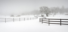San Diego : Julian (William Dunigan) Tags: san diego julian east county rural landscape california southern snow blizzard minimalism minimalist photography