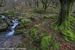 Parque Natural de Gorbeia  2019   #DePaseoConLarri #Flickr-6 (Jose Asensio Larrinaga (Larri) Larri1276) Tags: 2019 orozko bizkaia basquecountry euskalherria parquenaturaldegorbeiagorbea navarra otoño fotografía airelibre saltosdeagua naturaleza