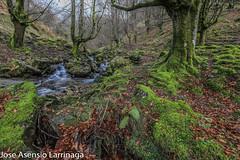 Parque Natural de Gorbeia  2019   #DePaseoConLarri #Flickr-5 (Jose Asensio Larrinaga (Larri) Larri1276) Tags: 2019 orozko bizkaia basquecountry euskalherria parquenaturaldegorbeiagorbea navarra otoño fotografía airelibre saltosdeagua naturaleza