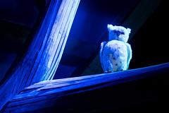 CLAB6059 (mangaddicted) Tags: christmas christmasvillage europe ilsognodinatale milan milano actors children christmasdecoration christmaslight christmastree culture elf elves event fun houses italy lights market park playful presents reindeer rooms santaclaus sledge underconstruction winter worker