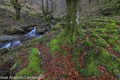 Parque Natural de Gorbeia  2019   #DePaseoConLarri #Flickr-3 (Jose Asensio Larrinaga (Larri) Larri1276) Tags: 2019 orozko bizkaia basquecountry euskalherria parquenaturaldegorbeiagorbea navarra otoño fotografía airelibre saltosdeagua naturaleza