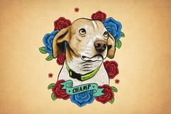 Champ (simang.studio) Tags: animals nature animal pets cute wildlife love pet cats dogs dog photography cat instagram naturephotography photooftheday dogsofinstagram catsofinstagram birds instagood petstagram animallovers art wildlifephotography puppy petsofinstagram animalphotography animalsofinstagram bhfyp