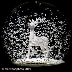 365-2019-339 - Snowing, all year round (phil wood photo) Tags: 365 365colorfun 365colourfun christmas color365 colour365 day339 december deer glass productphotography singlestrobe snowglobe square white