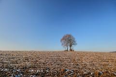 lonely tree (Xtraphoto) Tags: baum tree birke birch landscape landschaft acre acker frost frozen