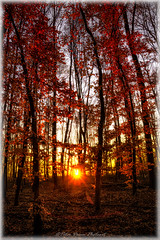 """""""My father, I don't understand you, but I trust in you"""" (Peter Daum 69) Tags: sunset sonnenuntergang licht light lightwork sonne sun scenery nature natura natur wald forest baum tree artwork art landschaft landscape farbe color dream traum magie magic canon eos"""