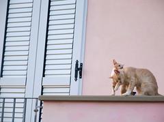 6561 - Mother & son (Diego Rosato) Tags: mother son madre figlio animale animal pet stray randagio kitten gattino gatto cat balcone balcony fuji x30 rawtherapee