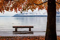 Acqua alta. (neldan16) Tags: water eos efs1855mmf3556isii italia autumn autumncolours piemonte foliage paesaggio paisaje canon landscape nature natura naturaleza lago lake laghi 600d verbanocusioossola lagomaggiore otoño