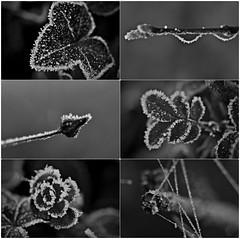 frostig (Uli He - Fotofee) Tags: ulrike ulrikehe uli ulihe ulrikehergert hergert nikon nikond90 fotofee advent weihnachten frostig frost dezember 2019 steine