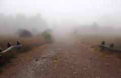 Downward Path (LeftCoastKenny) Tags: losgatoscreektrail stjosephshill hill trees brush grass fences fog path trail