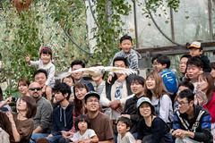 500_0899 (jinkemoole) Tags: bird kobedobutsuokoku zoo animal オオバタン moluccancockatoo