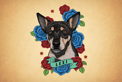Lexi (simang.studio) Tags: animals nature animal pets cute wildlife love pet cats dogs dog photography cat instagram naturephotography photooftheday dogsofinstagram catsofinstagram birds instagood petstagram animallovers art wildlifephotography puppy petsofinstagram animalphotography animalsofinstagram bhfyp