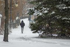 walking to wonderland (Lou Musacchio) Tags: nature snowing trees weather parks parcdesrapides villelasalle montreal quebec canada fleuvedestlaurent