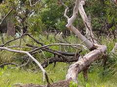 P1012916 1219 (sophbax22) Tags: phillip island victoria australia oswin roberts reserve