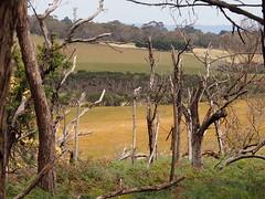 P1012904 1219 (sophbax22) Tags: phillip island victoria australia oswin roberts reserve