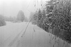 Quite Snowy (rATRIJS) Tags: canon50mmf18ltm 50mm ltm canon model7 canonmodel7 ilfordhp5plus ilfordhp5 hp5 hp5plus ilford expiredfilm l39 m39 rangefinder standdevelopment rodinal compardr09 analog 35mm bw blackandwhite winter latvia latvija cold snow