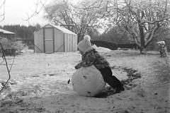 Ball Of Snow (rATRIJS) Tags: canon50mmf18ltm 50mm ltm canon model7 canonmodel7 ilfordhp5plus ilfordhp5 hp5 hp5plus ilford expiredfilm l39 m39 rangefinder standdevelopment rodinal compardr09 analog 35mm bw blackandwhite winter latvia latvija cold snow