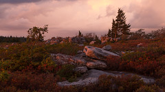 Evening Comes to the Dolly Sods (Ken Krach Photography) Tags: westvirginia
