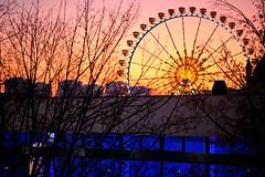 After sundown in the city (Pascal Volk) Tags: berlin mitte fernsehturm berlinmitte sonnenuntergang sundown sunset ocaso abendrot afterglow arrebol riesenrad ferriswheel noria dämmerung dämmerlicht twilight crepúsculo dusk invierno winter fujifilmxh1 fujifilmfujinonxf80mmf28rlmoiswrmacro 80mm phaseonecaptureone hiwosomoshots