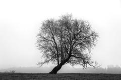 Der Baum - Dezember 2019 (Pippilotta aus dem Tal) Tags: sel85f18 baum tree