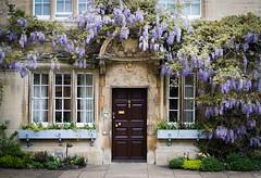 The Masters door (judy dean) Tags: judydean 2019 oxford reworked jesuscollege wisteria door