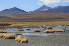 Icy high-altitude wetlands, high in the Andes (Ruby 2417) Tags: wetlands marsh wetland bog scenery landscape mountain mountains chile andes atacama antofagasta volcano volcanic ice frozen winter water pond lake