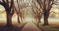 The pathway (juliana.uchoa) Tags: trees park paths ngc cambridge fog morning sunrise outside nature flickr2019