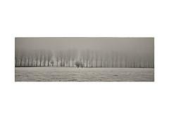Fog (Keraman (Black and White)) Tags: infrared720nm infrared infrarood wijnendale torhout vlaanderen fog mist tree treerow