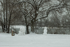 frosty is back (Lou Musacchio) Tags: nature snowman snowing trees weather parks parcdesrapides villelasalle montreal quebec canada fleuvedestlaurent