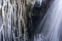 Closeup of ice accumulation on plants at Willow Falls at Willow River State Park in Hudson, Wisconsin (Lorie Shaull) Tags: discoverwisconsin wisconsin willowfalls waterfall winter snow ice willowriverstatepark hudson stcroixcounty