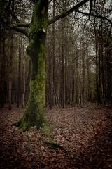 Delamere Forest, Cheshire (terryhamlett) Tags: fujifilm fuji cheshire xt2 delamereforest forests trees nature walkwalking uk contrast leaves parks forestryengland seasons
