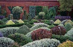 Walled garden, RHS Wisley (tonybill) Tags: december gardens miscellaneous rhs rhswisley sonya7iii surrey voigtlandernokton40mmf12fe winter wisley bokeh
