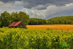 Countryside (mikederrico69) Tags: farm land barn house rural landscape crops forest quebec summer plants canada clouds sky